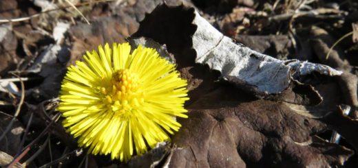 frühe Blüte im Jahr